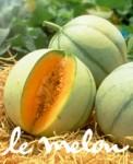 medium_Melon.jpg
